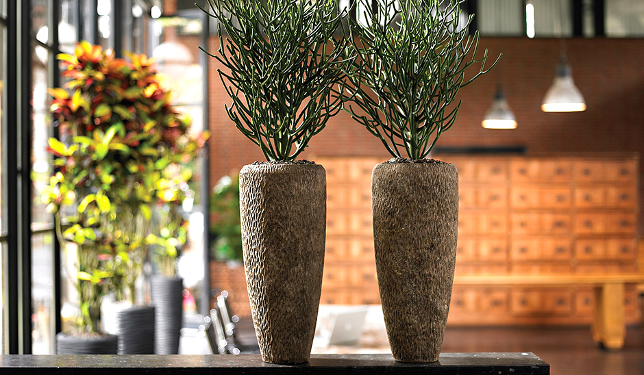 Raumgestaltung blumen krigar for Raumgestaltung pflanzen